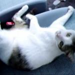 「今日遅刻した理由はこれです…」朝起きたら自家用車で美人猫が爆睡中だったw