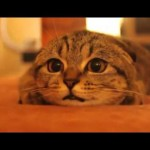 まるで人間そのもの(笑)怖い映像を見てる猫ちゃんの表情が可愛すぎて悶絶~