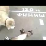 道端で倒れて動かないネコを心配してかけつけたワンコ。次の瞬間…