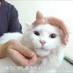 飲んだ目印はハナペロ♪簡単にできる猫に錠剤を飲ませるコツ