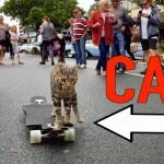 完璧に乗りこなしてる!スケボー乗りの猫のスキルが想像以上だった!!