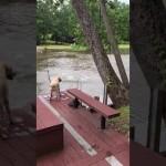 こんなにビックリするなんて…湖に飛び込んだ飼い主さんを見た愛犬の勇敢な行動