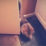 これは困った…愛猫の毎朝の日課に飼い主困惑