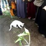 埋葬された飼い主さんの側から離れようとしない猫の姿が切なすぎる…