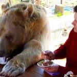 こんなに大きいのに甘えん坊!ロシア夫妻と暮らす熊との朝のひとときにほっこり…