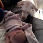 これは優しい!赤ちゃんに毛布をかけてあげる賢い犬