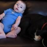 これは正直すぎるw赤ちゃんがウンチをした瞬間のワンコの反応