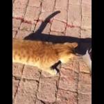 アカデミー俳優も顔負け!猫に捕まり死に直面したネズミが取った起死回生の手段とは…