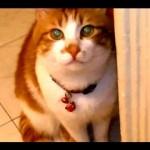 これは愛しい…どんな時でも帰宅を大歓迎してくれる猫が超可愛い^^
